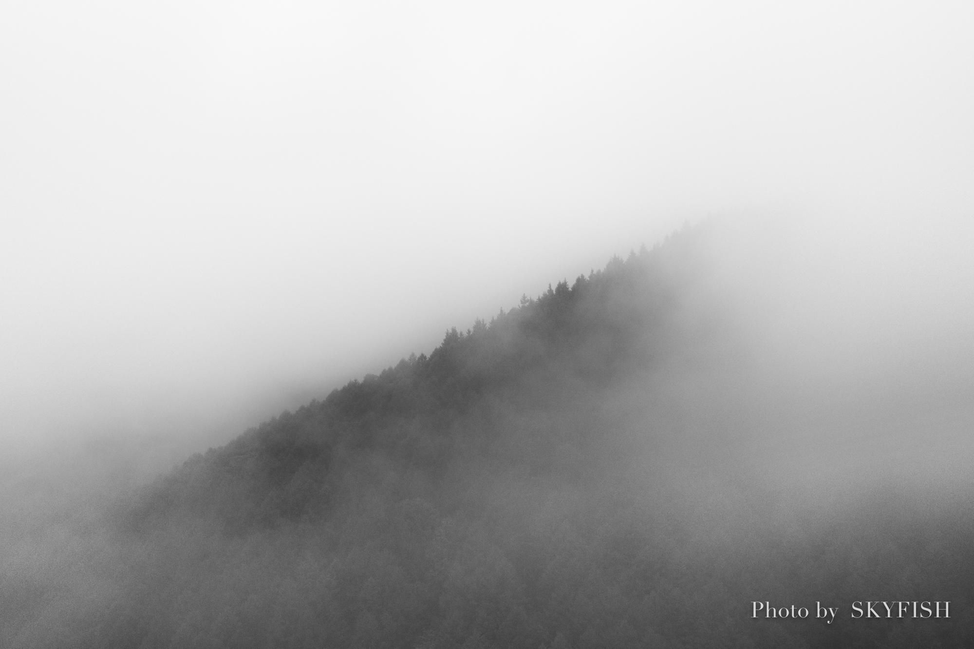 ドローンで空撮した霧の森